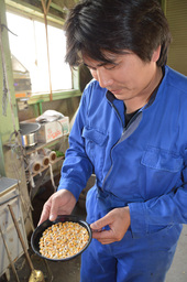 10月19日、空知管内長沼町 収穫されたトウモロコシの実。家畜用の濃厚飼料となる 経済部・本庄彩芳撮影