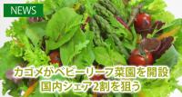 カゴメが山梨県・北杜市にベビーリーフ菜園を開設 国内シェア2割を狙う