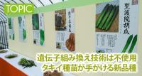 遺伝子組み換え技術は不使用 タキイ種苗が手がける新品種