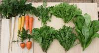 都内で無農薬・無化学肥料の西洋野菜・江戸野菜を栽培 20~30代の若手農家で結成された「T.Y.FARM (ティーワイファーム)」