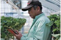 【ITで攻めの農業:3】圃場のクラウド管理で一等米を増産!