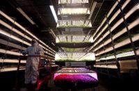 農業と技術のアグテック投資が世界で拡大