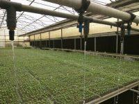 イスラエルのハイテク農業が普及するインド。政府による50%補助も