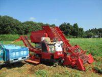 トマト収穫作業請負へ カゴメと美野里運送倉庫