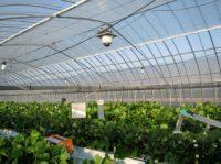 キヤノン版スマート農業、カメラとAIで成長度把握
