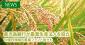 鹿児島銀行が農業生産法人を設立 10億円規模の農業ファンド設立も