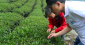 台湾のアグリテックスタートアップのTSSE(神農)、プレシリーズAで300万米ドルを調達——農業従事者にバイオを用いた農薬代替剤を提供