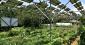 全国の実態調査で見えてきた、ソーラーシェアリングの現状と課題 (1/2)